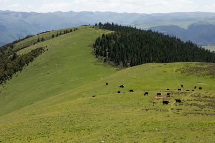 Upland Forage and Meadow Mix